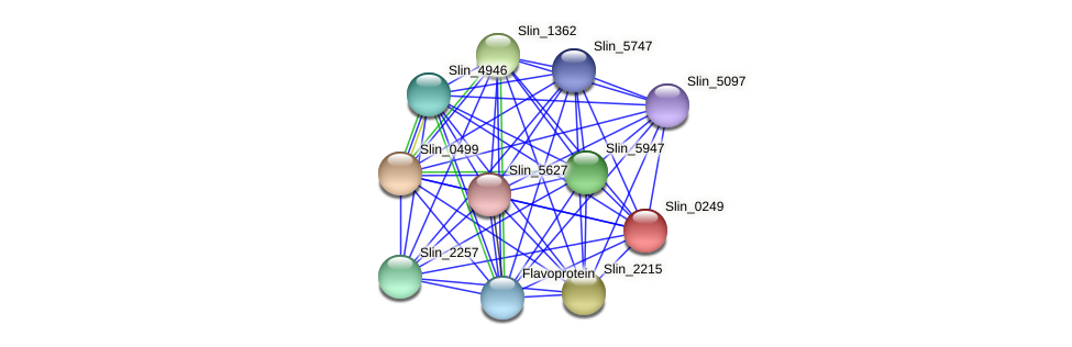 Slin_0249 protein (Spirosoma linguale) - STRING interaction network
