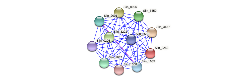 Slin_0252 protein (Spirosoma linguale) - STRING interaction network