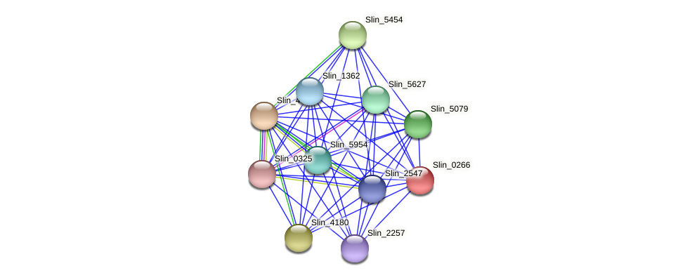Slin_0266 protein (Spirosoma linguale) - STRING interaction network
