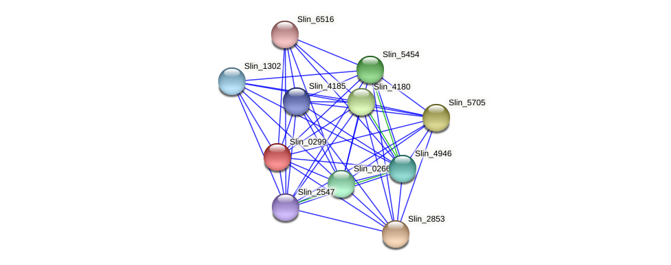 Slin_0299 protein (Spirosoma linguale) - STRING interaction network