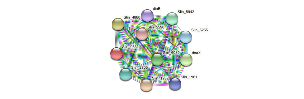 Slin_0531 protein (Spirosoma linguale) - STRING interaction network