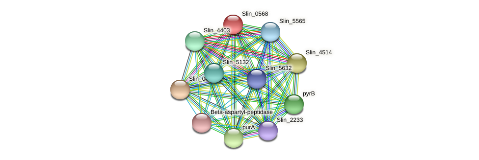 Slin_0568 protein (Spirosoma linguale) - STRING interaction network