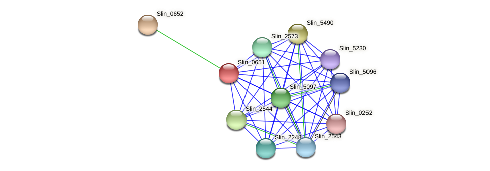 Slin_0651 protein (Spirosoma linguale) - STRING interaction network
