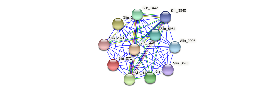 Slin_0714 protein (Spirosoma linguale) - STRING interaction network