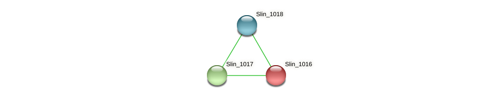 Slin_1016 protein (Spirosoma linguale) - STRING interaction network