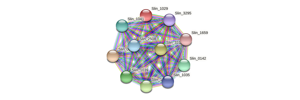 Slin_1029 protein (Spirosoma linguale) - STRING interaction network
