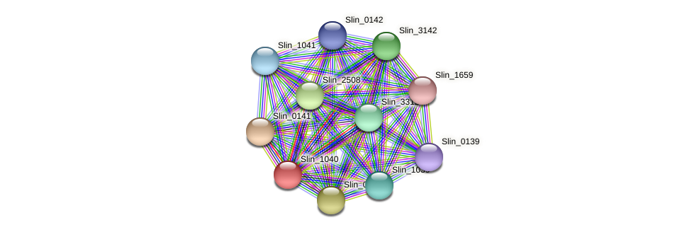 Slin_1040 protein (Spirosoma linguale) - STRING interaction network