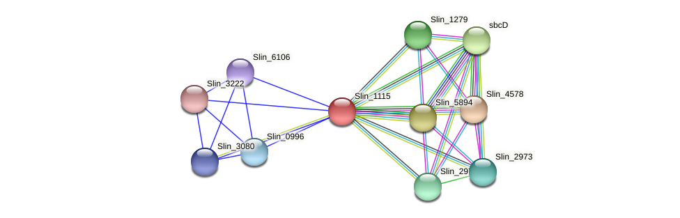 Slin_1115 protein (Spirosoma linguale) - STRING interaction network