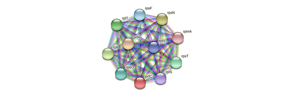 prfC protein (Spirosoma linguale) - STRING interaction network