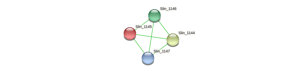 Slin_1145 protein (Spirosoma linguale) - STRING interaction network