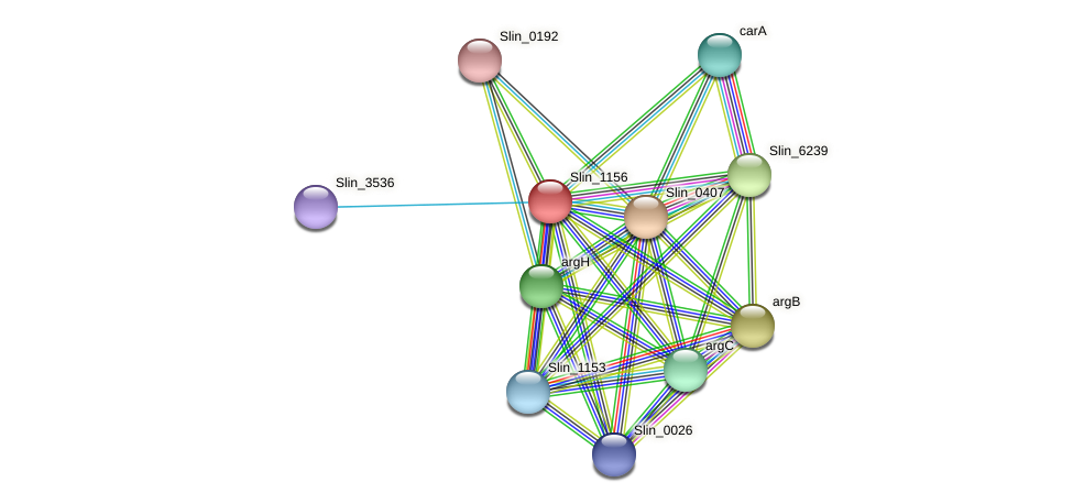 Slin_1156 protein (Spirosoma linguale) - STRING interaction network
