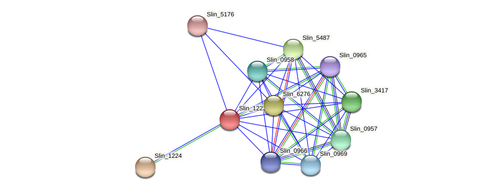 Slin_1223 protein (Spirosoma linguale) - STRING interaction network