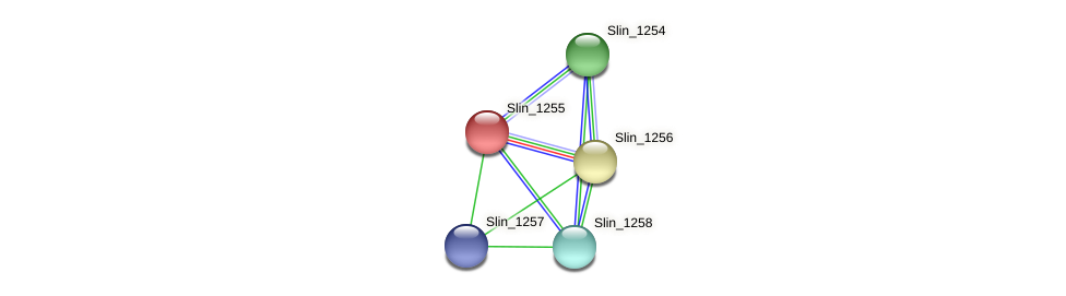 Slin_1255 protein (Spirosoma linguale) - STRING interaction network