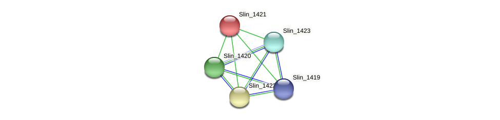 Slin_1421 protein (Spirosoma linguale) - STRING interaction network