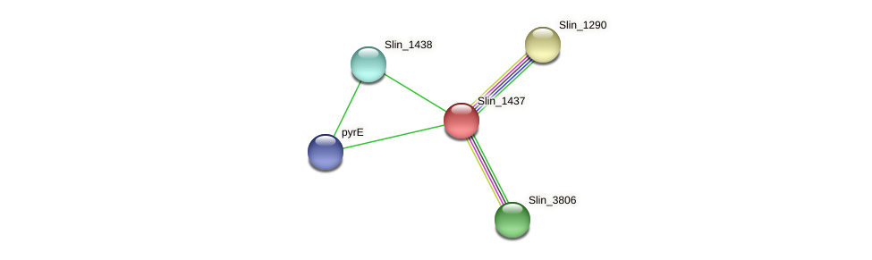 Slin_1437 protein (Spirosoma linguale) - STRING interaction network