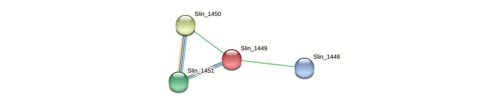 Slin_1449 protein (Spirosoma linguale) - STRING interaction network