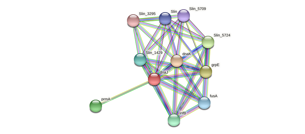 dnaJ protein (Spirosoma linguale) - STRING interaction network