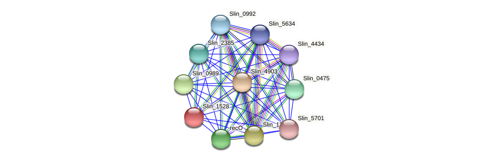 Slin_1528 protein (Spirosoma linguale) - STRING interaction network