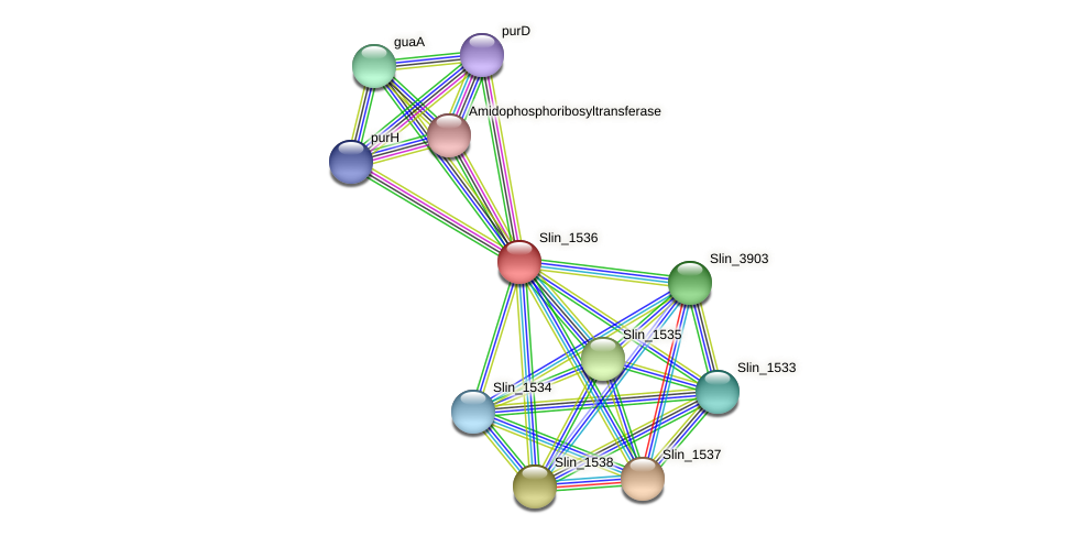 Slin_1536 protein (Spirosoma linguale) - STRING interaction network