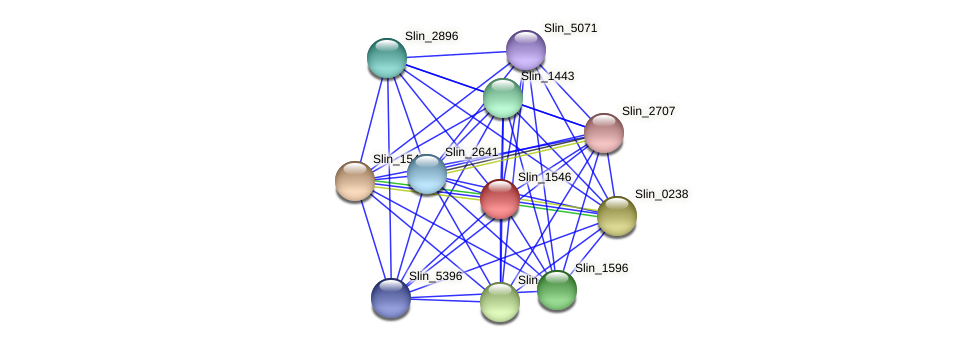 Slin_1546 protein (Spirosoma linguale) - STRING interaction network