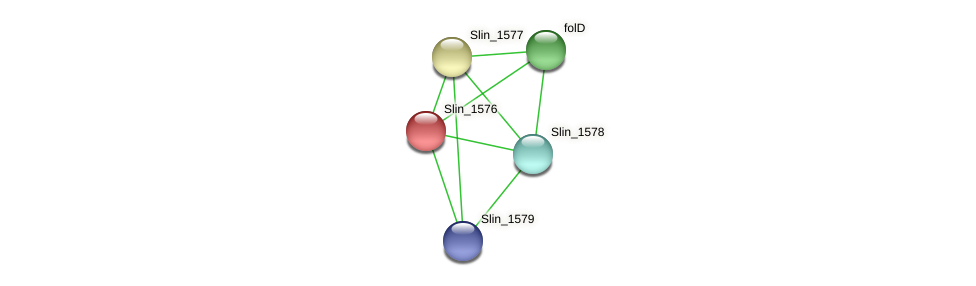 Slin_1576 protein (Spirosoma linguale) - STRING interaction network