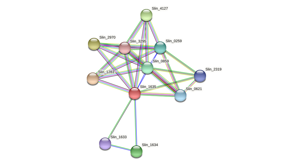 Slin_1635 protein (Spirosoma linguale) - STRING interaction network