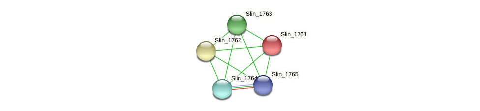 Slin_1761 protein (Spirosoma linguale) - STRING interaction network