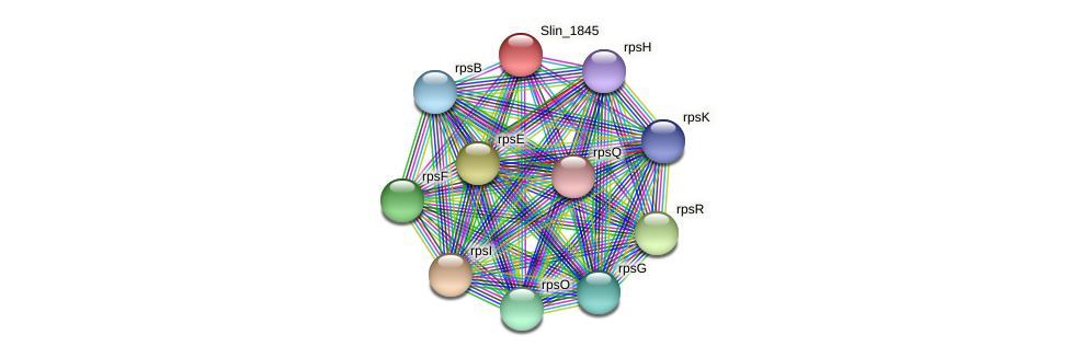 Slin_1845 protein (Spirosoma linguale) - STRING interaction network