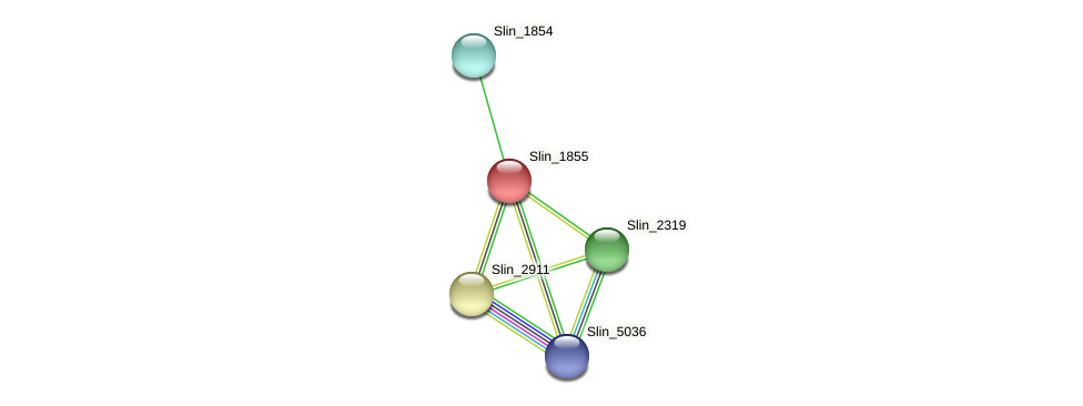 Slin_1855 protein (Spirosoma linguale) - STRING interaction network