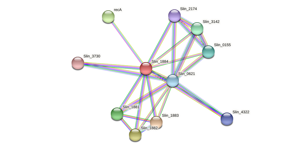 Slin_1884 protein (Spirosoma linguale) - STRING interaction network