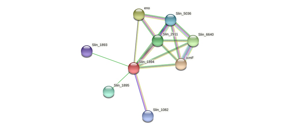Slin_1894 protein (Spirosoma linguale) - STRING interaction network