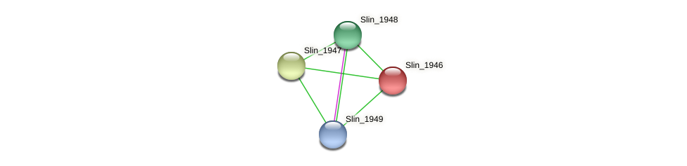 Slin_1946 protein (Spirosoma linguale) - STRING interaction network