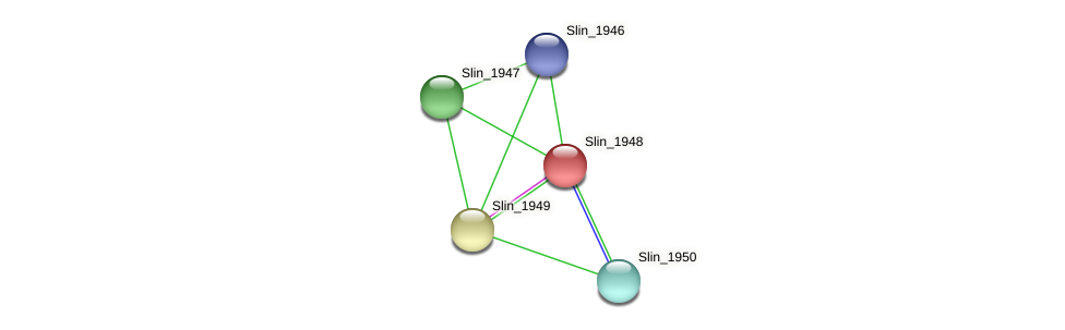 Slin_1948 protein (Spirosoma linguale) - STRING interaction network