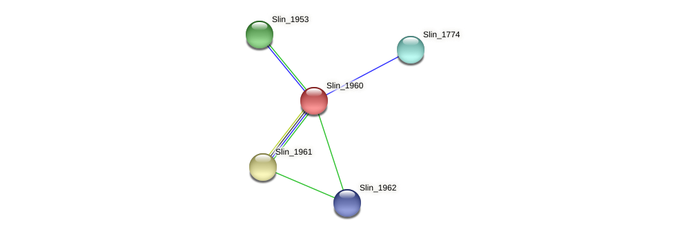 Slin_1960 protein (Spirosoma linguale) - STRING interaction network