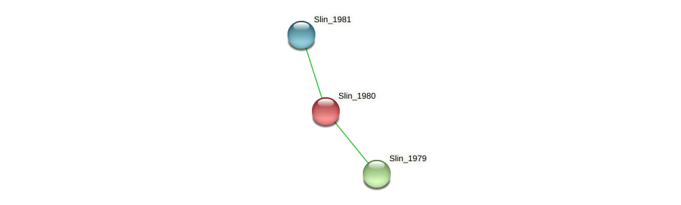 Slin_1980 protein (Spirosoma linguale) - STRING interaction network