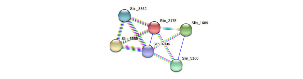 Slin_2175 protein (Spirosoma linguale) - STRING interaction network