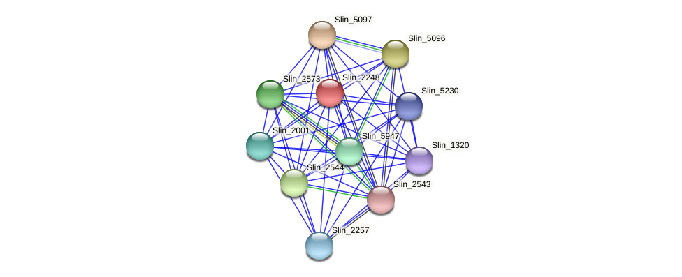 Slin_2248 protein (Spirosoma linguale) - STRING interaction network