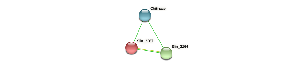 Slin_2267 protein (Spirosoma linguale) - STRING interaction network