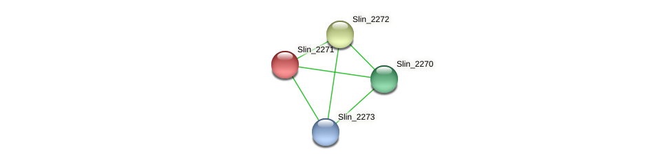 Slin_2271 protein (Spirosoma linguale) - STRING interaction network
