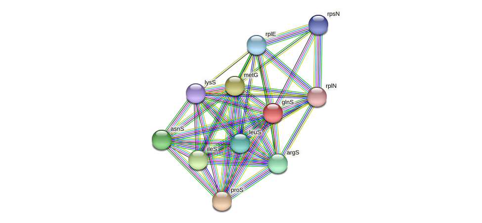 glnS protein (Spirosoma linguale) - STRING interaction network