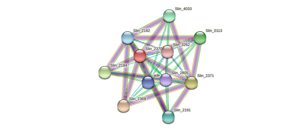 Slin_2370 protein (Spirosoma linguale) - STRING interaction network