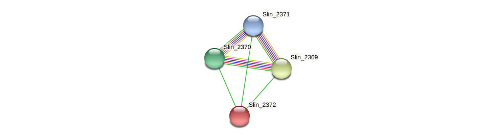 Slin_2372 protein (Spirosoma linguale) - STRING interaction network