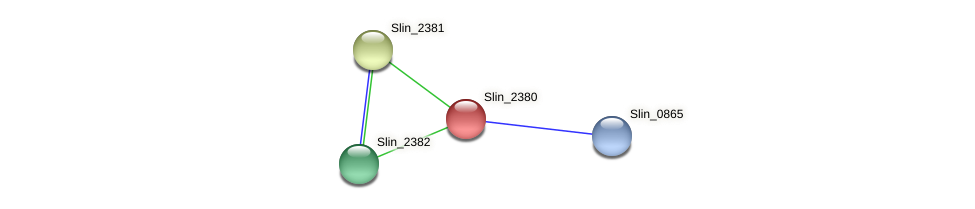 Slin_2380 protein (Spirosoma linguale) - STRING interaction network