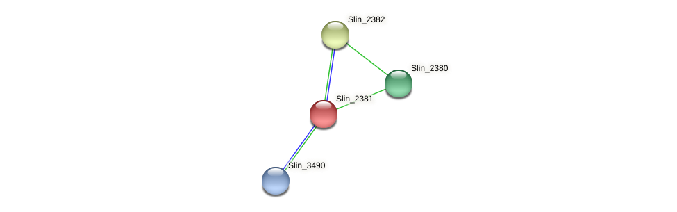 Slin_2381 protein (Spirosoma linguale) - STRING interaction network