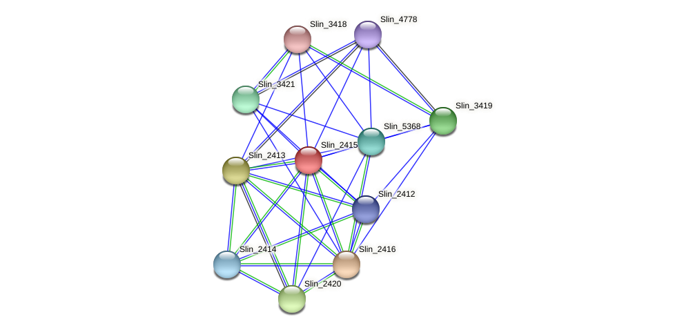 Slin_2415 protein (Spirosoma linguale) - STRING interaction network