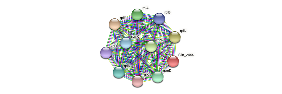 Slin_2444 protein (Spirosoma linguale) - STRING interaction network