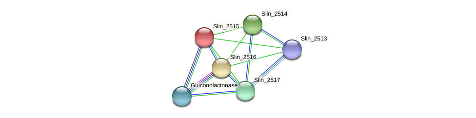 Slin_2515 protein (Spirosoma linguale) - STRING interaction network
