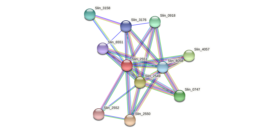 Slin_2551 protein (Spirosoma linguale) - STRING interaction network