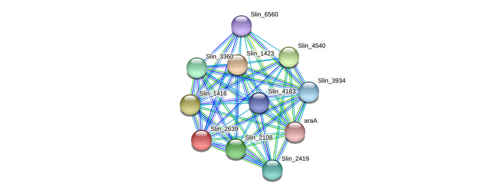Slin_2639 protein (Spirosoma linguale) - STRING interaction network