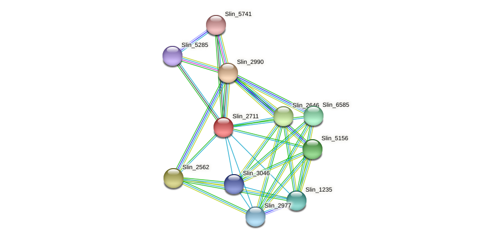 Slin_2711 protein (Spirosoma linguale) - STRING interaction network